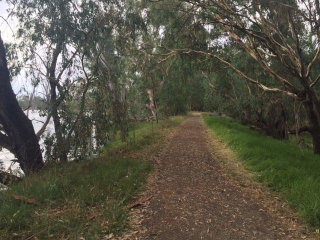 Take a walk with Milawa Billa, the River Murray: #CroakeyGo reports from Albury