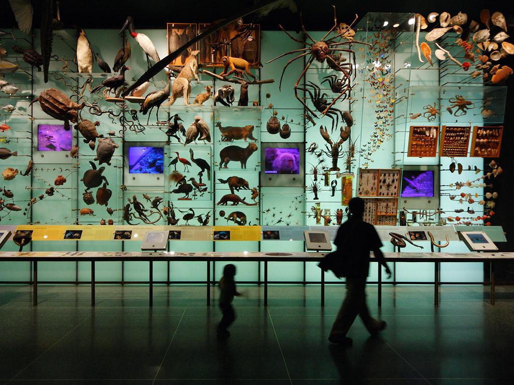 Where was Australia during the UN biodiversity summit?