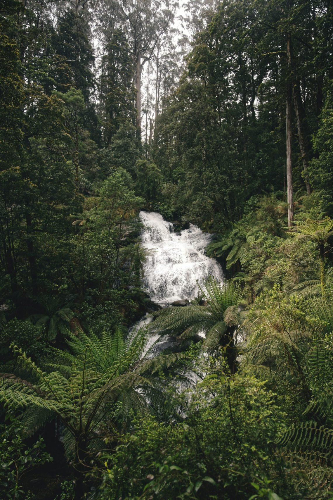 Unsplash/botanicalnature