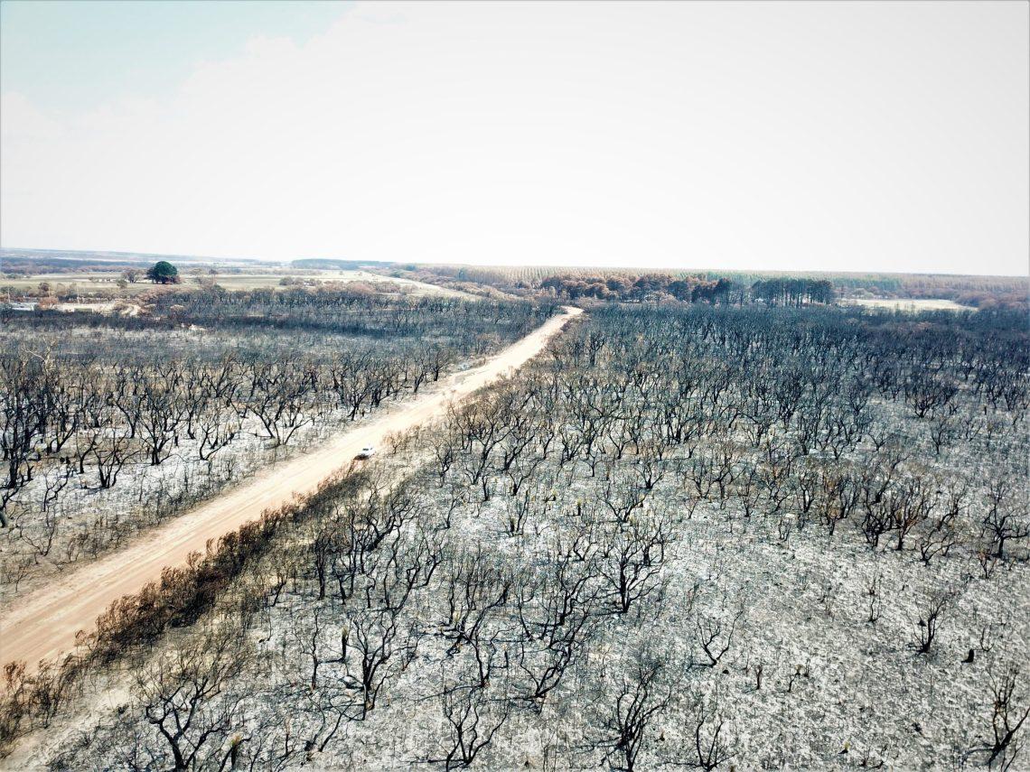 Blackened forest following Kangaroo Island bushfires. Photo by Charles G via Unsplash