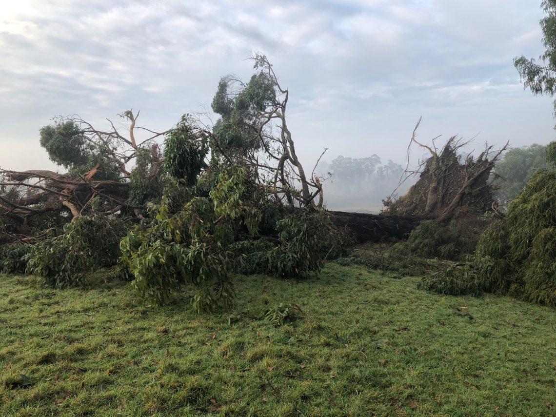 Storm damage on the farm of Victorian GP, Assoc Prof Vicki Kotsirilos. Photo supplied