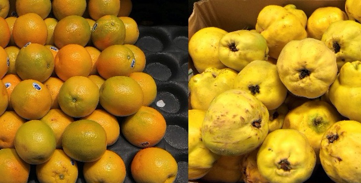 Healthy food matters. Oranges and quinces, photograph by Professor Bronwyn Fredericks